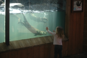 Beautiful little girl playing with the otters at the Sedgwick County Zoo, Wichita, KS