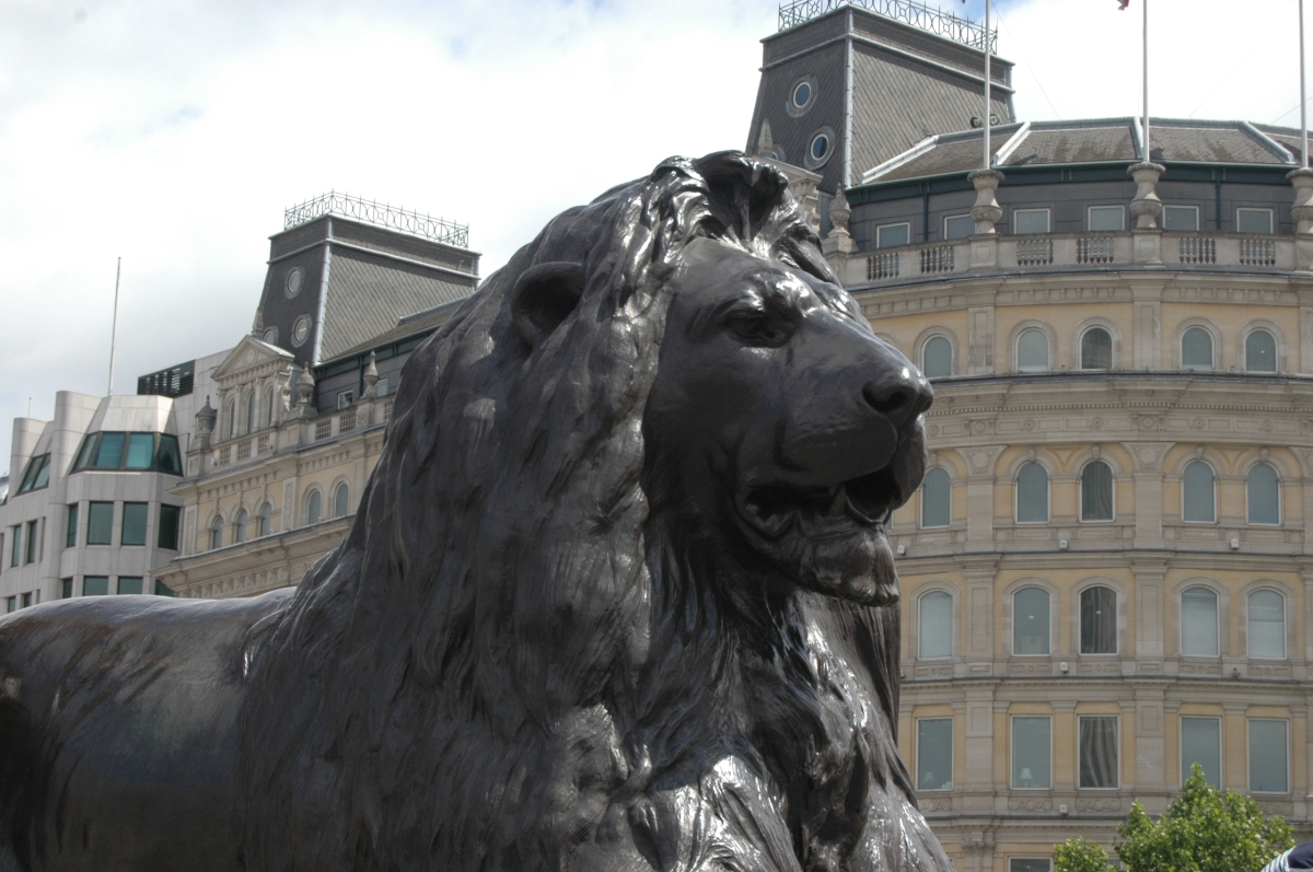 A statue of a lion at Trafalgar Square, London, England, UK
