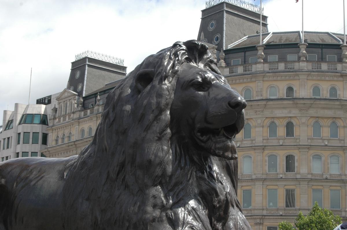 A statue of a lion at Trafalgar Square, London, England, UK