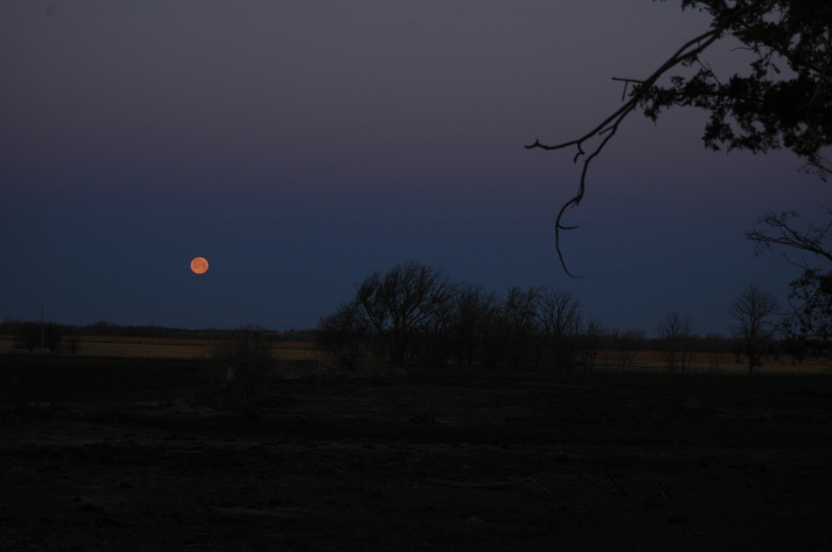A full orange moon setting at Safe Haven Farm, Haven, KS