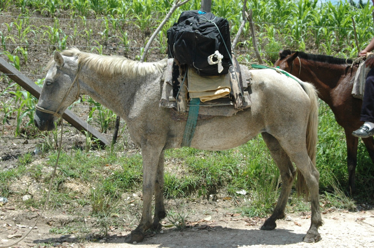 One of the horses that carried our team to the Kekchi village Esfuerzo Dos in Peten, Guatemala