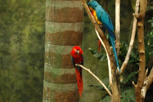 Bright, beautiful macaws at the Omaha Zoo, Omaha, NE