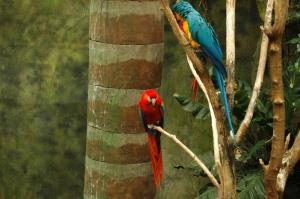 Bright, beautiful macaws at the Omaha Zoo, Omaha, NE