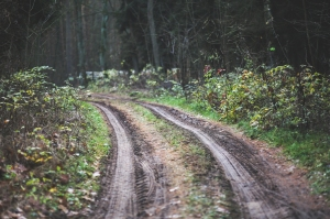 wood-road-dirty-forest_1532x1021