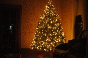 The Christmas Tree at Safe Haven Farm, Haven, KS