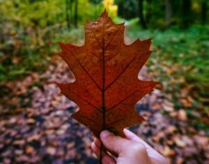 leaf-autumn-16016